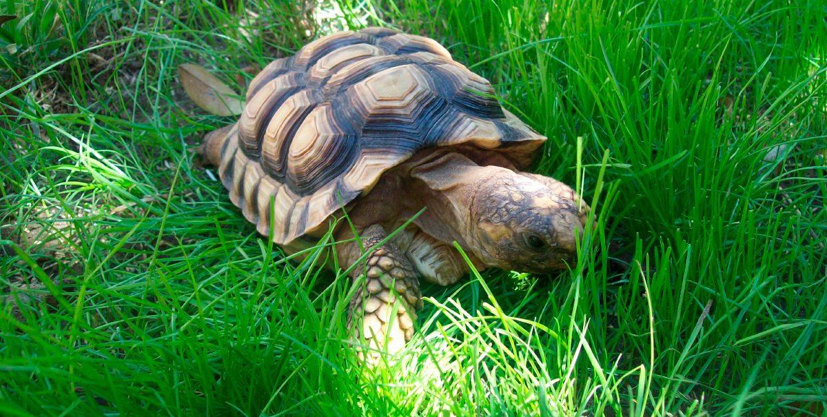 Galer a de im genes cuidados de las tortugas de tierra for Filtro para estanque de tortugas