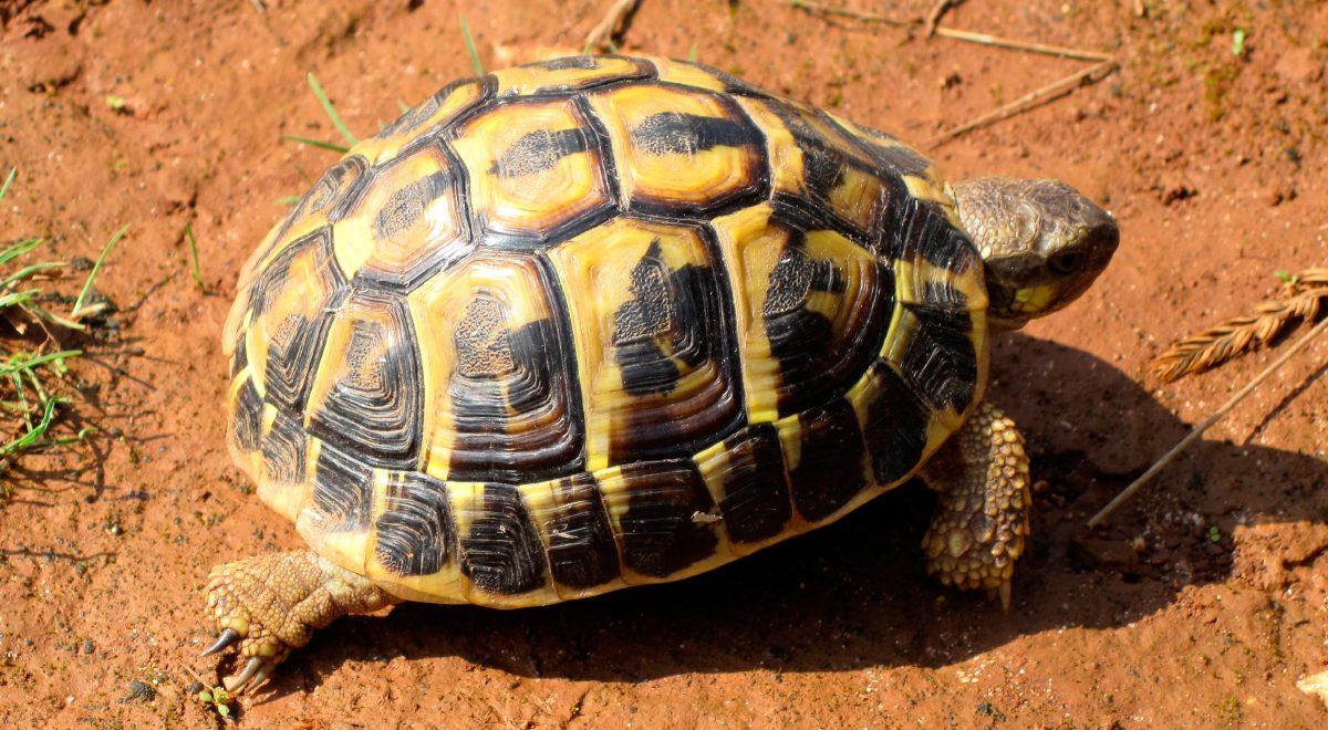 Galer a de im genes tortuga mediterr nea - La mediterranea ...