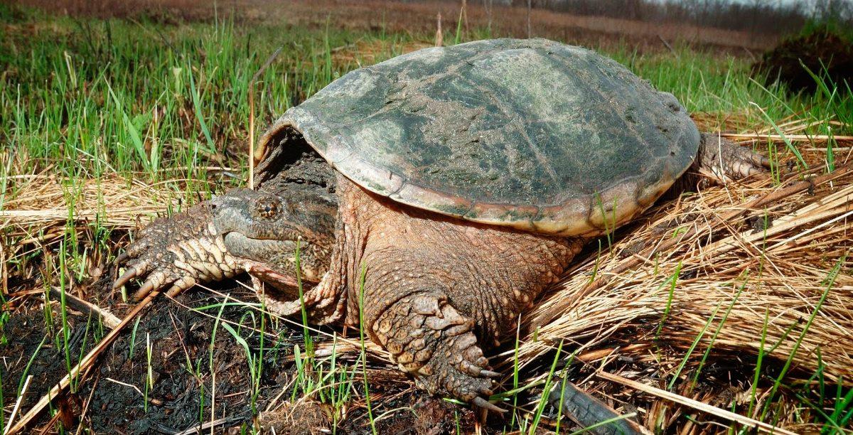 Cuidados De Las Tortugas De Tierra - Como-construir-un-estanque-para-tortugas