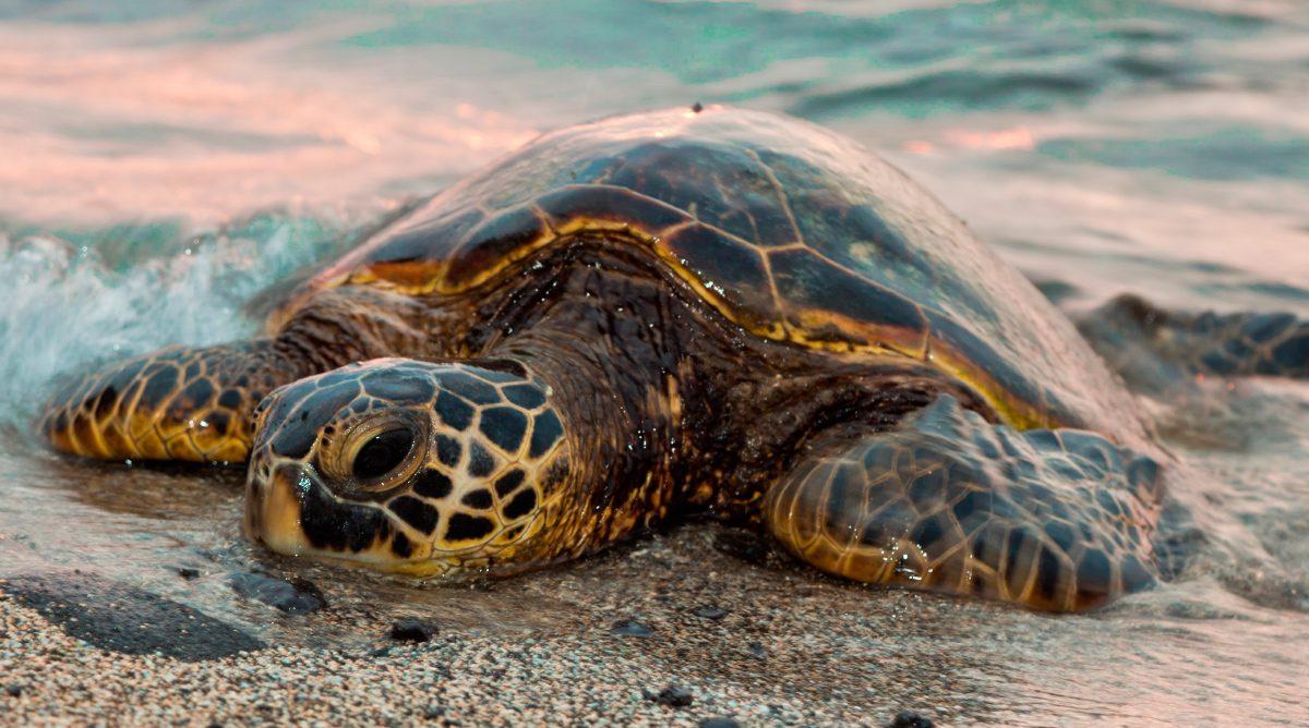 Foto de una tortuga marina :: Imágenes y fotos