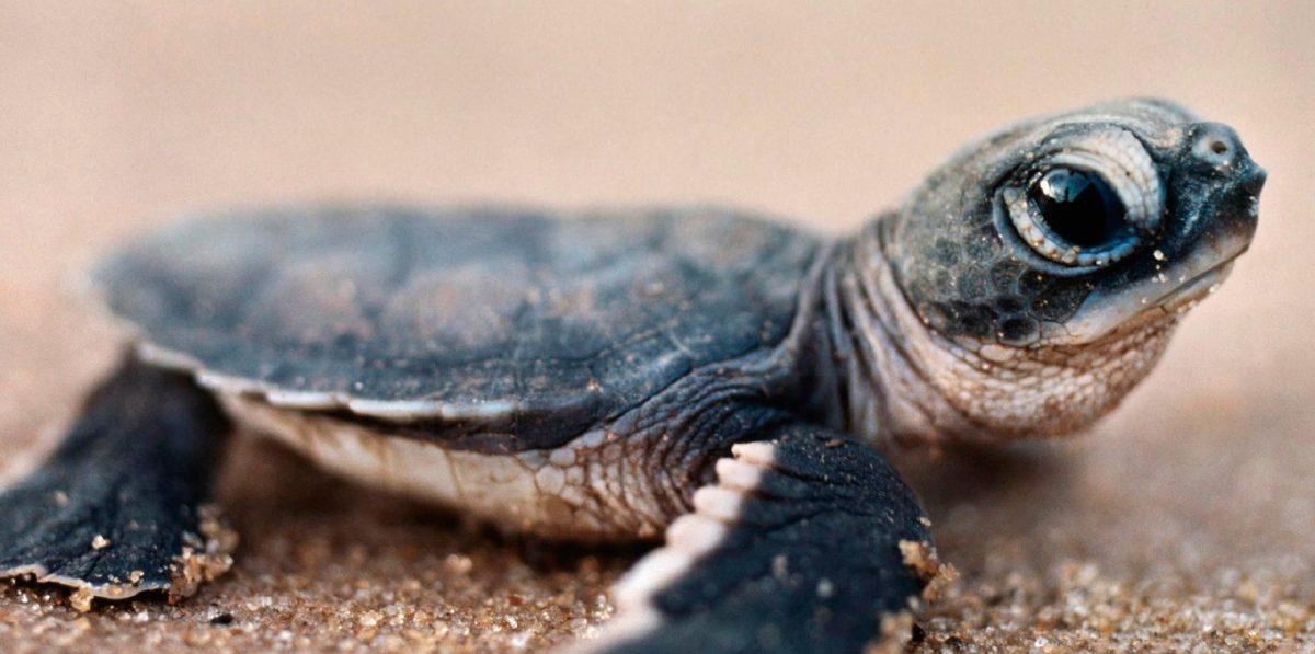 Anatomía de las tortugas
