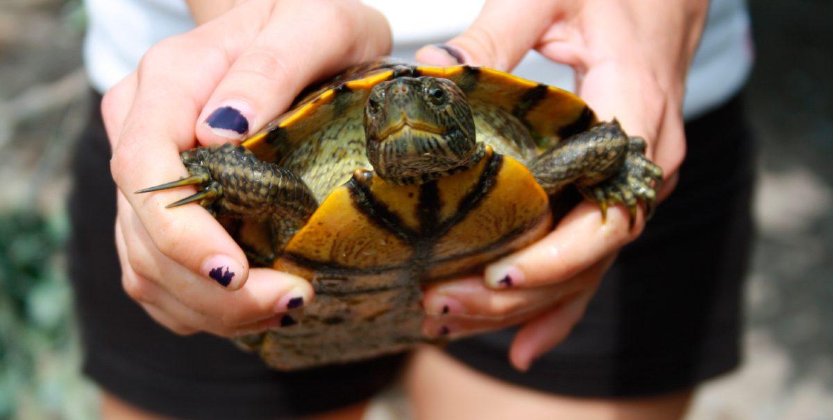 Galería de imágenes: Tipos de tortugas
