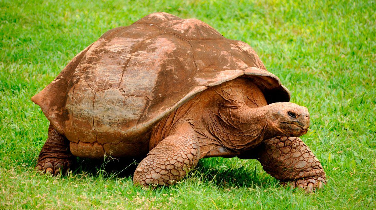 tortugas terrestres im genes y fotos