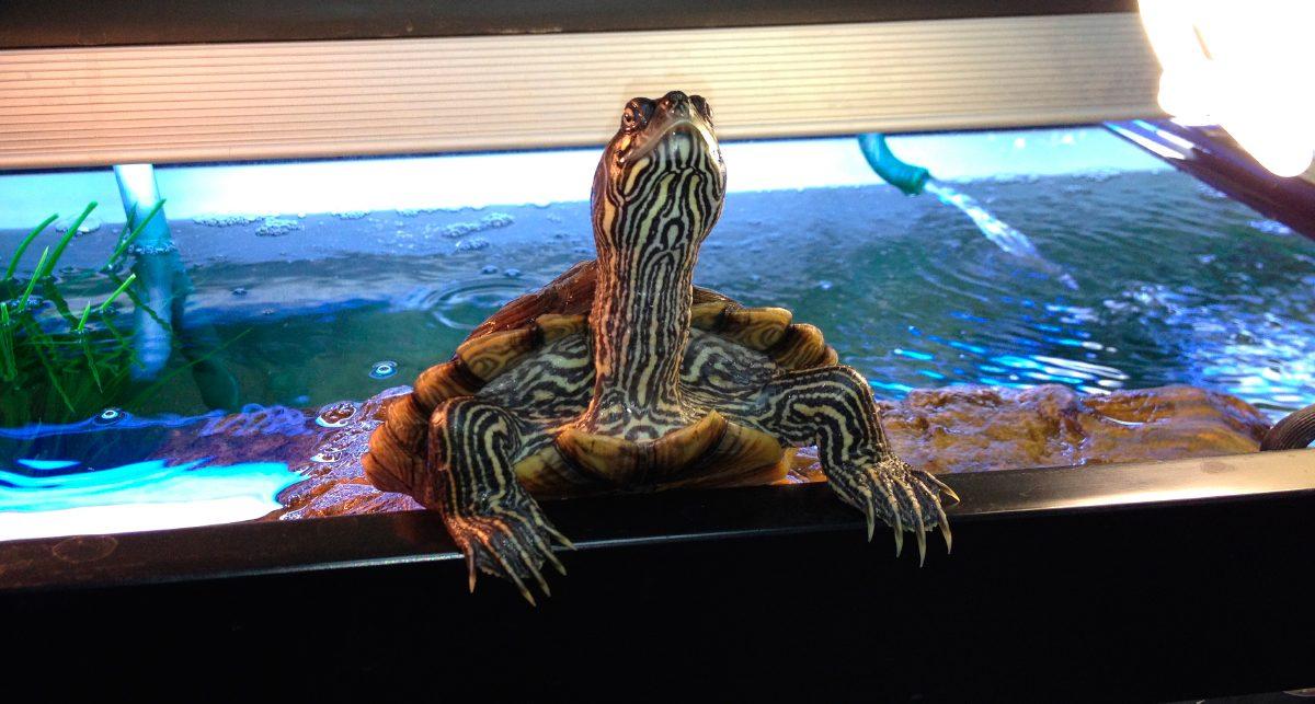 Estanques para tortugas de agua estanque de jardin - Estanques para tortugas de agua ...